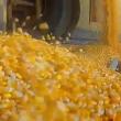 Vídeo sobre o Alimento Confiável