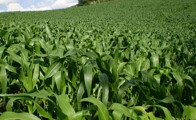 Priorizamos o desenvolvimento da agricultura orgânica